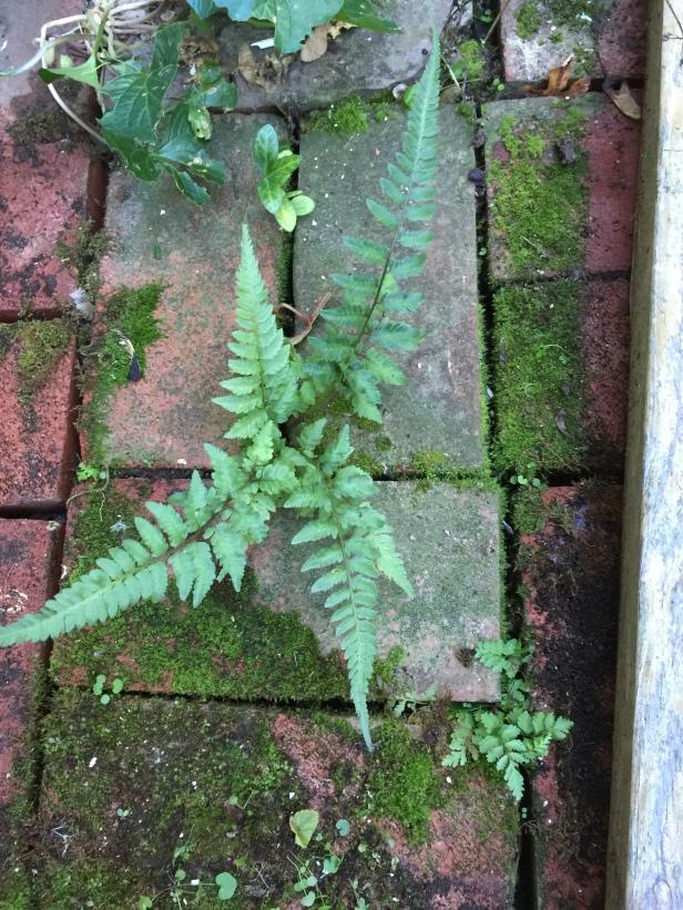 brick_fern